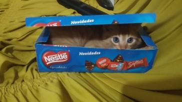 Veio o Leorio ao invés de chocolates