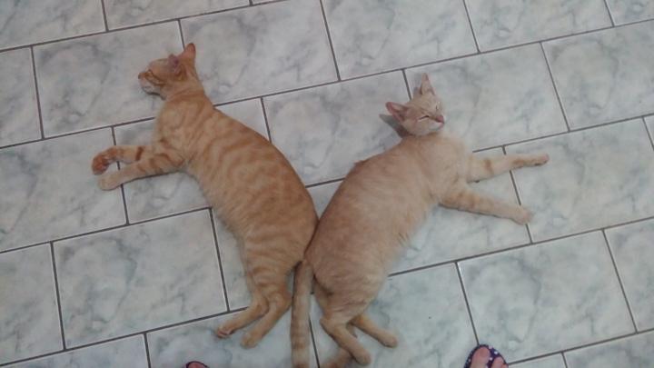 Tigrilson (Moby) e Leonildo